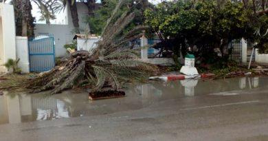 13. Mai 2018: Gewittersturm trifft Mahdia – Diverse Palmen stürzten um