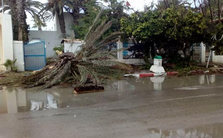 Gewittersturm trifft Mahdia am 13. Mai 2018 - Diverse Palmen stürzten um