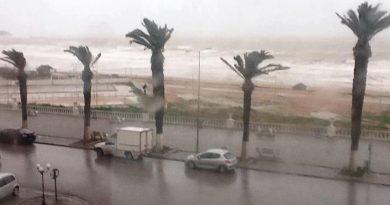 Symbolfoto Palmen im Sturm