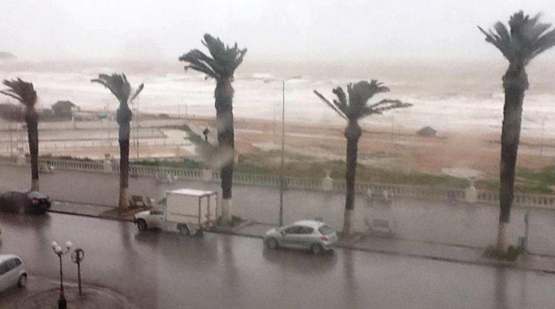 25 Jan 2021 Symbolfoto Palmen im Sturm