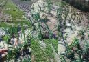 Sintflutartige Regenfälle in Siliana. Sechsjährige stirbt, erheblicher Sachschaden
