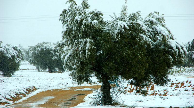 25 Dez 2020: Rückgang der Temperaturen und Schnee in den Höhenlagen